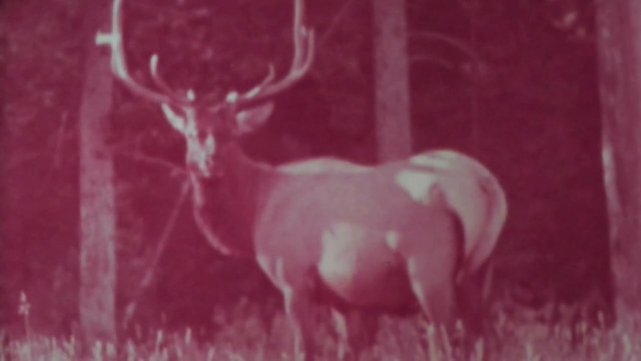 Filmpoem 47/ The Day the Deer Came